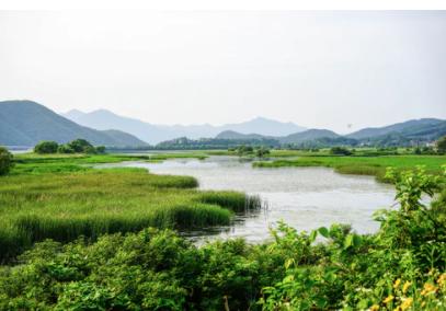 esi-ssaf-wetlands-group
